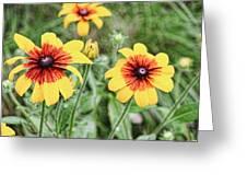 Great Blanket Flower Gaillardia Greeting Card