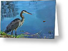 Great Blue Along The Canal Greeting Card