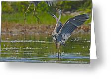 Great Blue Battle Greeting Card