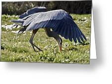 Great Blue Dining Out Greeting Card