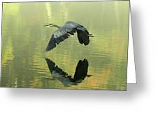 Great Blue Fly-by Greeting Card