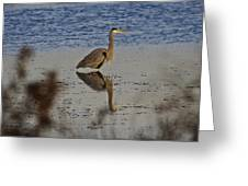 Great Blue Heron 1 Greeting Card