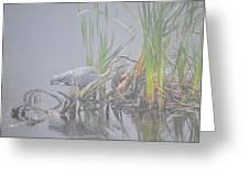 Great Blue Heron 3 Greeting Card
