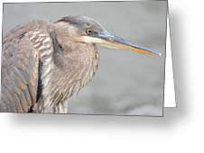 Great Blue Heron 4 Greeting Card