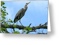 Great Blue Heron Afternoon Fishing  Greeting Card