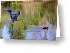 Great Blue Heron And Coot Greeting Card