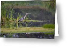 Great Blue Heron At Down East Maine Wetland Greeting Card