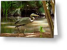 Great Blue Heron By Pond Greeting Card