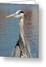 Great Blue Heron By The Water Greeting Card