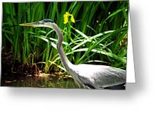 Great Blue Heron By Yellow Flower Greeting Card