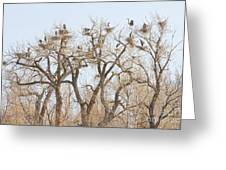 Great Blue Heron Colony Greeting Card