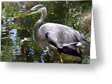 Great Blue Heron - Colorful Reflections Greeting Card