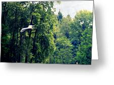 Great Blue Heron Flying Past The Trees Above Trojan Pond 2 Greeting Card