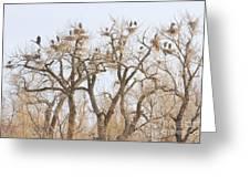 Great Blue Heron Hangout Greeting Card