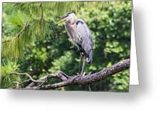 Great Blue Heron I Greeting Card