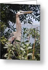 Great Blue Heron II Greeting Card