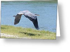 Great Blue Heron In Flight Greeting Card