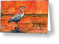Great Blue Heron In Marsh Greeting Card