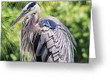 Great Blue Heron Iv Greeting Card