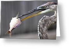 Great Blue Heron - Just Fred Greeting Card
