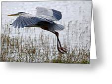 Great Blue Heron Landing Series 3 Greeting Card
