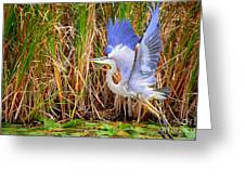 Great Blue Heron Lift Off Greeting Card