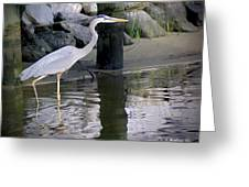 Great Blue Heron - Mealtime Greeting Card