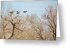 Great Blue Heron Nest Building 1 Greeting Card