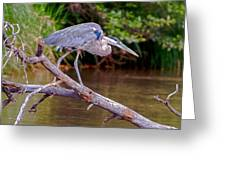 Great Blue Heron Oak Creek Canyon Sedona Arizona Greeting Card