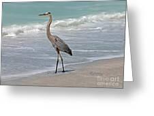 Great Blue Heron On Beach Greeting Card