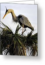 Great Blue Heron On Palm Greeting Card