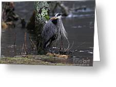 Great Blue Heron On The Clinch River Greeting Card