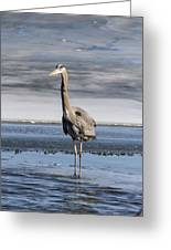 Great Blue Heron Portrait Greeting Card