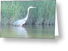 Great Blue Heron Reflecting Greeting Card