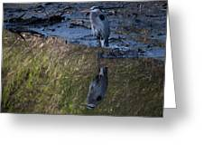 Great Blue Heron Reflection Greeting Card