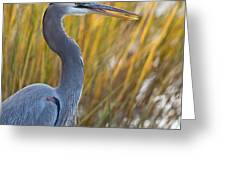 Great Blue Heron Square Image Greeting Card