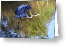 Great Blue Heron Taking Off Greeting Card