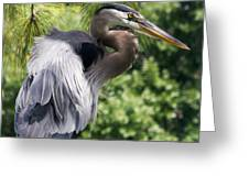 Great Blue Heron Vi Greeting Card