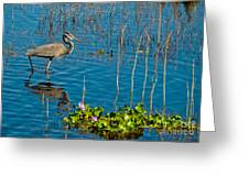 Great Blue Heron Wading II Greeting Card