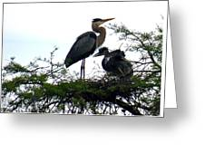 Great Blue Heron With Fledglings II Greeting Card