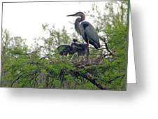 Great Blue Heron With Fledglings Greeting Card
