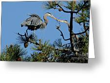 Great Blue Heron With Nest Material Greeting Card