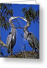Great Blue Herons Greeting Card