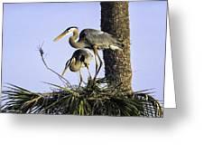Great Blue Herons Nesting Greeting Card