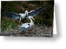 Great Blue Herons Nesting Greeting Card