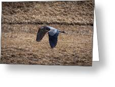 Great Blue In Flight 2 Greeting Card