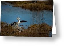 Great Blue Landing Greeting Card