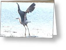 Great Blue Lift Off Series 1 Greeting Card