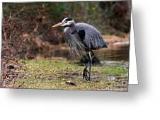 Great Blue On The Clinch River IIi Greeting Card