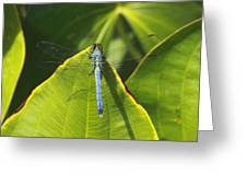 Great Blue Skimmer Greeting Card